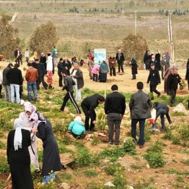Şanlıurfa'da Halep Çamları Boy Atacak