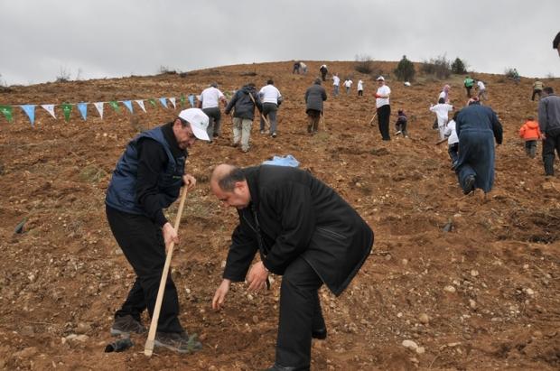Amasya'da 1.500 Çam İçin İlk Adım