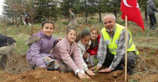 KIRIKKALE'DE Yeşeren Fidanlar Toprakla Buluşuyor