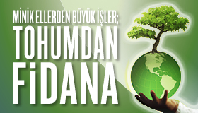 Tohumdan Fidana