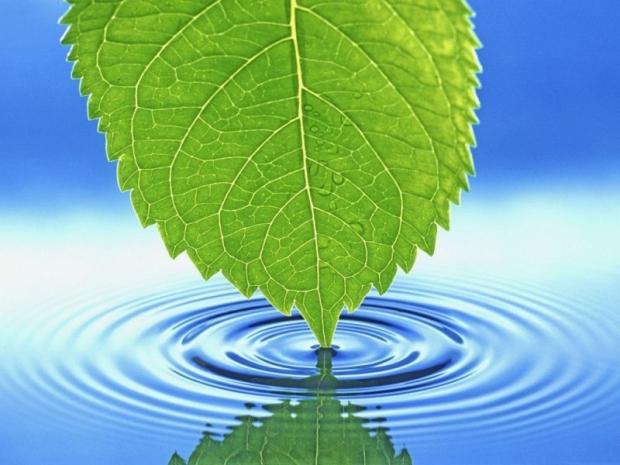 Su Nedir? Suyun Önemi