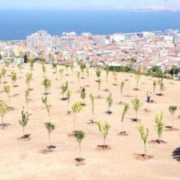 Maltepe'de Ağaçlandırma Seferberliği