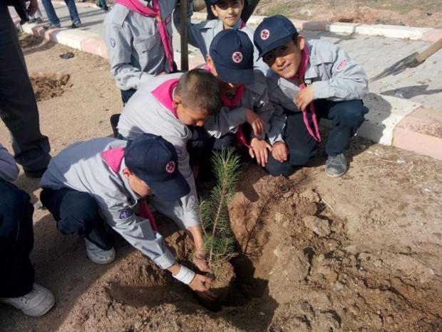 Aksaray'da Bitki Örtüsü Zenginleşiyor