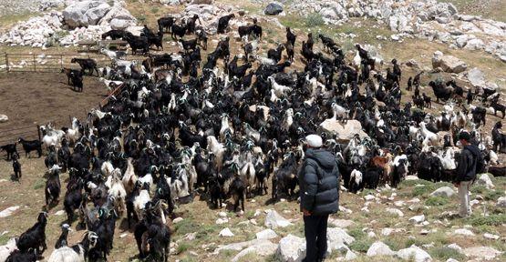 Çoban Değil 'Sürü Yönetimi Elemanı'