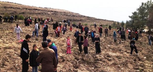 İzmir Buca'da Bin Adet Fıstık Çamı Dikimi Yapıldı