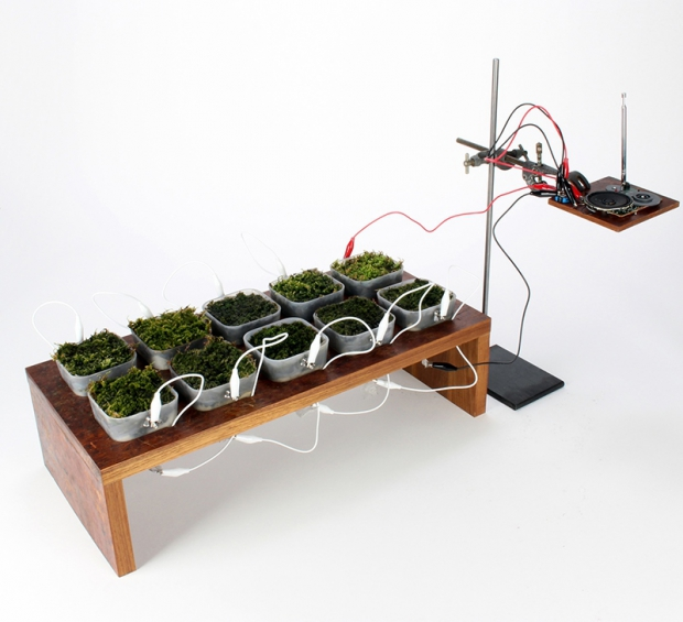 Saksı Bitkileri Güneş Işığını Elektriğe Dönüştürecek!