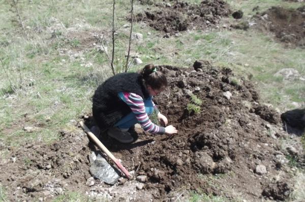 Afgan Ormanı'na 5 Bin Fidan