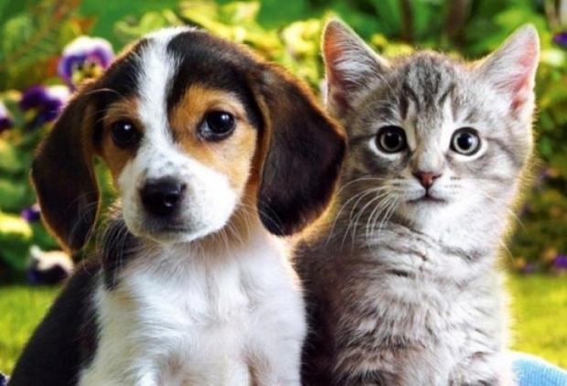 TBMM Çevre Komisyonu'ndan Hayvanseverlere Müjde