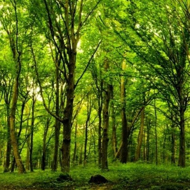 Hatıra Ormanlarındaki Ağaç Sayısı 21 Milyon Oldu