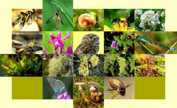 22 Mayıs Dünya Biyolojik Çeşitlilik Günü