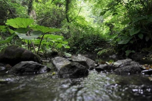 Danaağzı Mevkii Tabiat Parkı Oldu