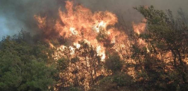 Piknikçilerin Ateşi 120 Hektarı Yaktı!