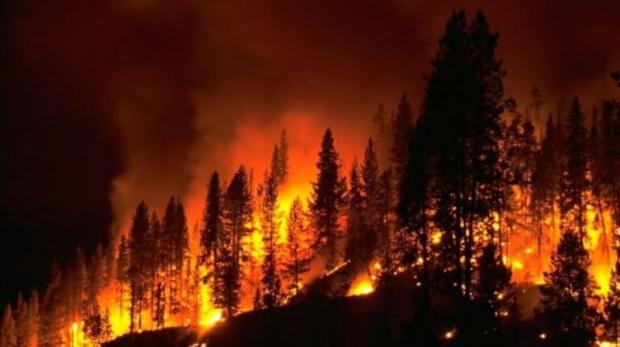 Milas'ta Orman Yangını: 600 Hektar Zarar Gördü