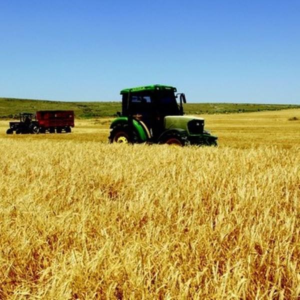 Tarım Alanları Giderek Daralıyor