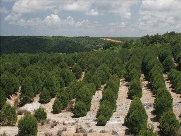 Hatıra Ormanlarına Rekor Bağış