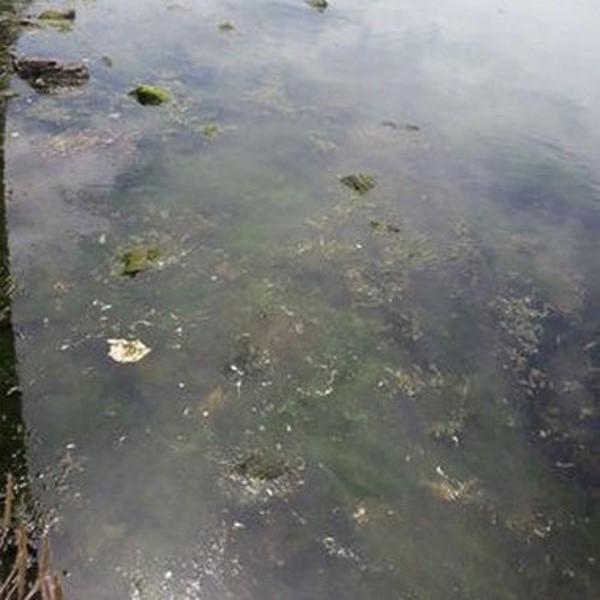 Marmara Denizi'nde Kirlilik Alarmı