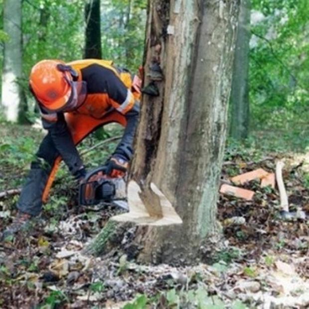 Arnavutluk'ta 10 yıl Ağaç Kesmek Yasaklandı
