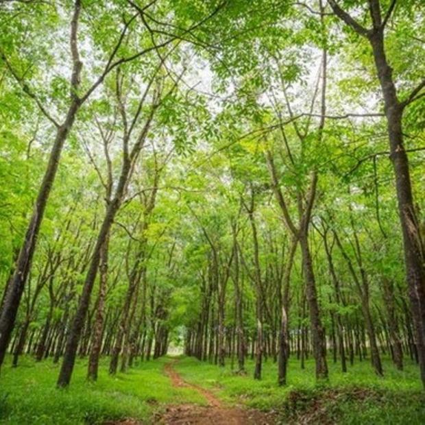 Karbonu Tutmada Ormanlarımız 4. Sırada