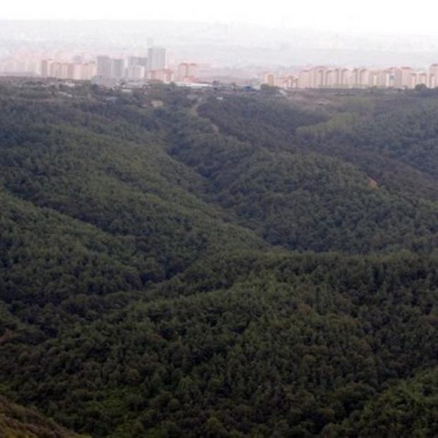 İstanbul'un Yüzde 45′i Ormanlık Alan