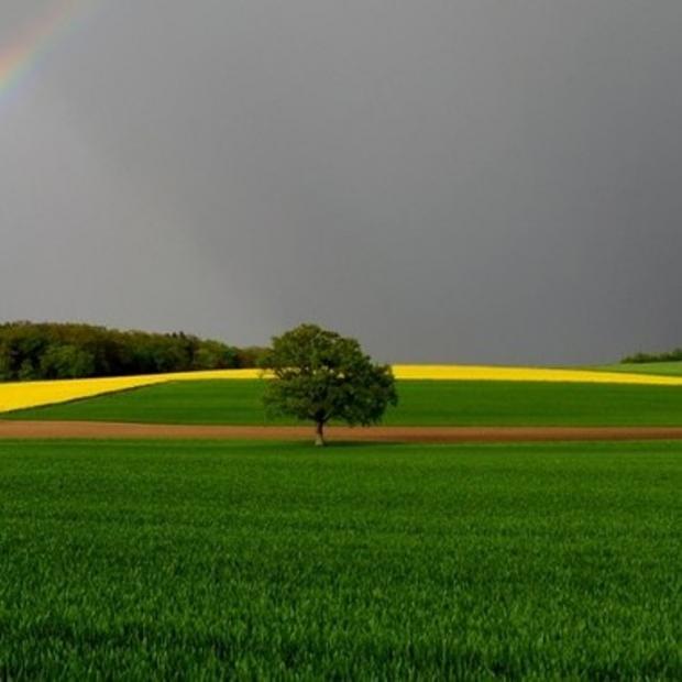 Küresel Isınmanın İyi Yanı Yeşillenme