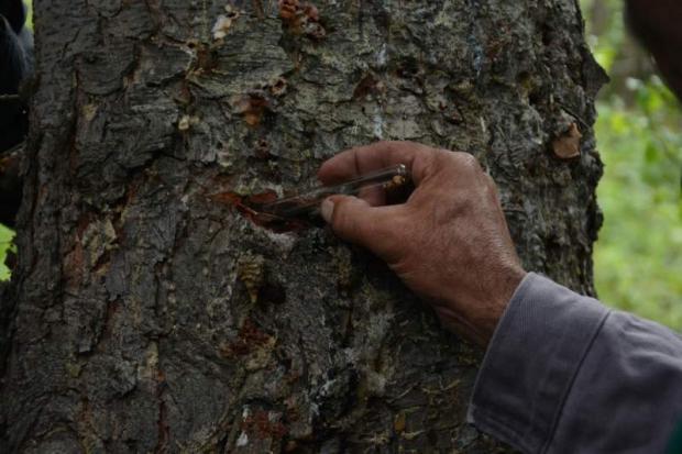 Ormanlara Zarar Veren Böceklere Karşı 2016'da, 690 Bin Avcı Böcek Ormanlara Salındı…
