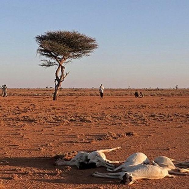 Somali'de Kuraklık Nüfusun Yarısını Tehdit Ediyor