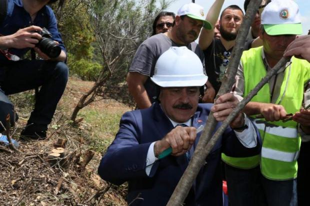Orman ve Su İşleri Bakanlığı 5 Yıl İçinde 1,5 Milyon Yabani Zeytini (Delice) Ekonomiye Kazandıracak