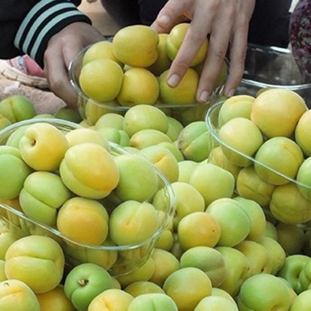 Mersin'de Meyve Hasadı Mutluluğu