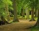 Yeşil Alanlar Sağlıklı Bir Yaşam Sağlıyor