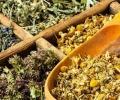 Şifalı Bitkiler Ekonomiye de İlaç Oldu