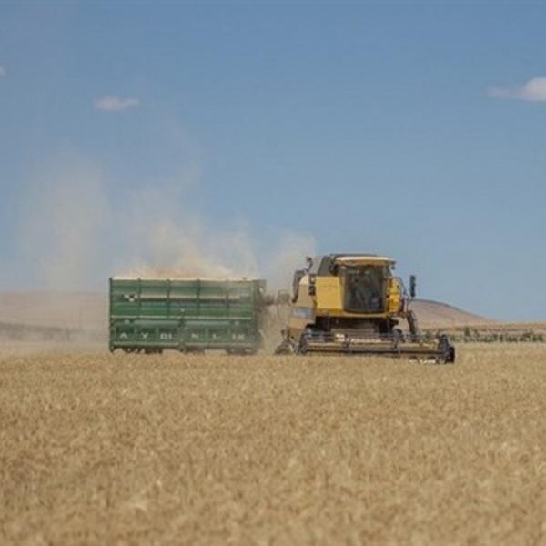 GAP Çiftçisinin Kuraklık Endişesi