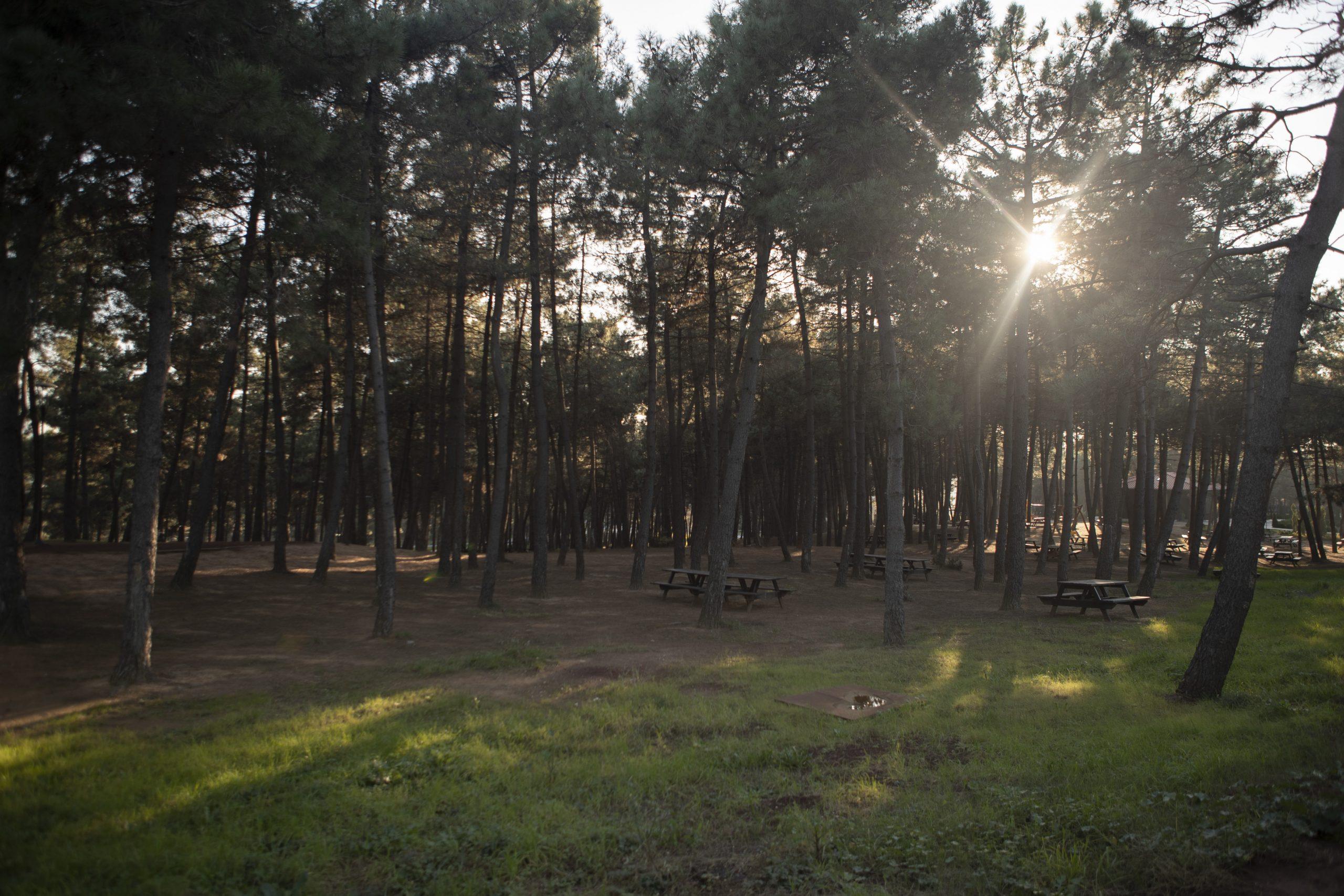 Hacegan Hatıra Ormanı